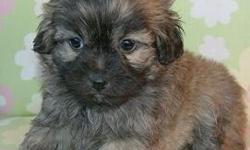 puppies ready to go at 8 and 10 weeks shedfree and allergyfree some cash only no checks and no airline shipping call 330-275-2644 or visit www.puppies234.com $250-$420