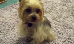 Need new home for small (6 pounds), spayed, 2-1/2 year old purebred Yorkie. She is Blonde and Silver in color, cute, smart, vet current, and micro chipped. She is house broken, likes her walks, and enjoys being around other small animals. She is a good