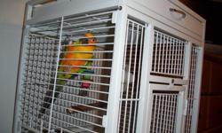 i have a sun conure about a year and a half old. he loves attention. unfortunatly i can no longer keep him. he comes with his cage which was bought new a couple months ago. he will come with his hatch date papers, he was hatched on march 18th 2010. pick